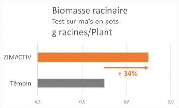 Zimactiv Biomasse racinaire
